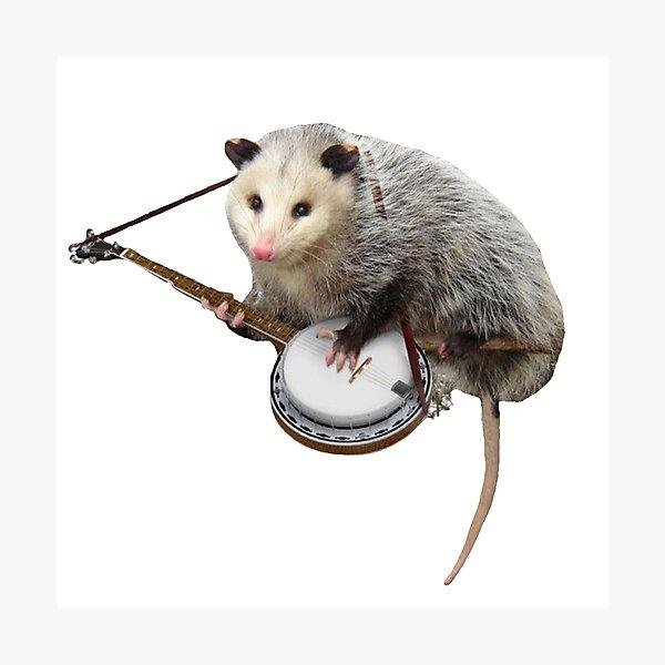 Possum Playing Banjo Photographic Print