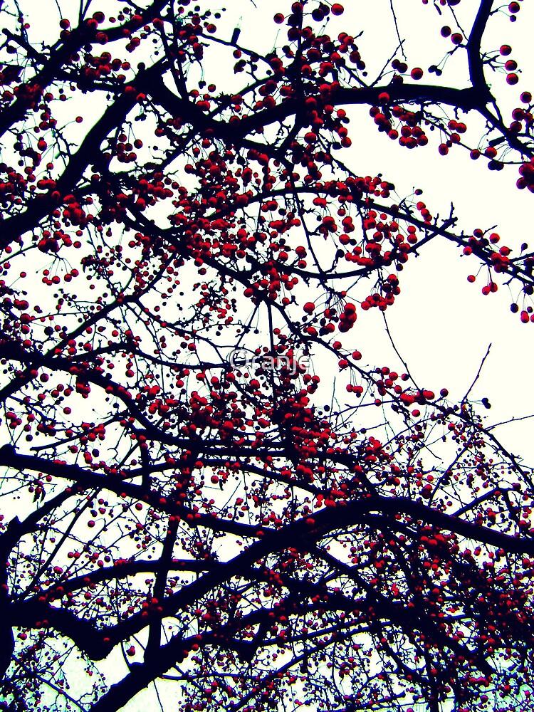 Winter Berries by Oranje