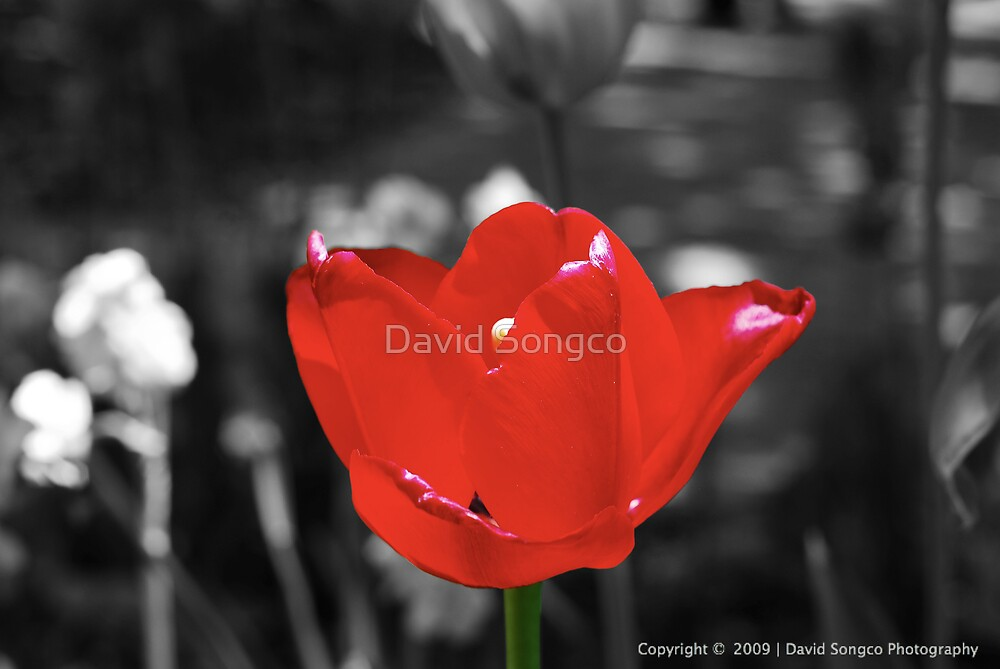 City Flower by David Songco