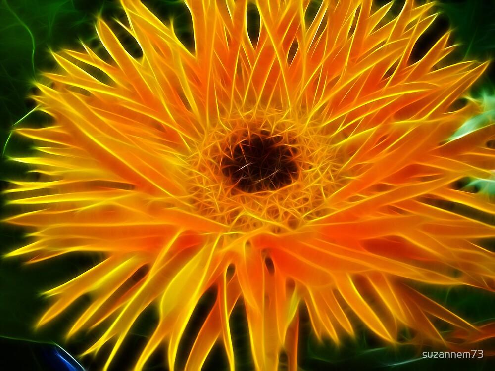 Blazing Daisy by suzannem73