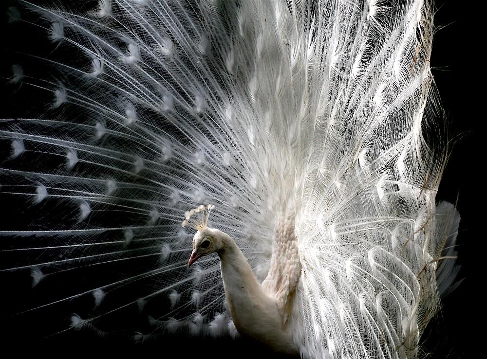 Otherworldly bird by Amanda Gazidis