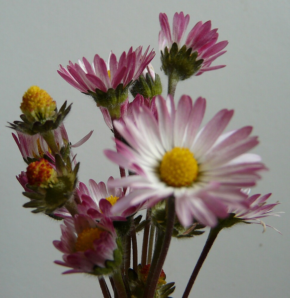 Beautiful weeds by ClareLH