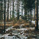 Durch den Wald von alexlikeart1