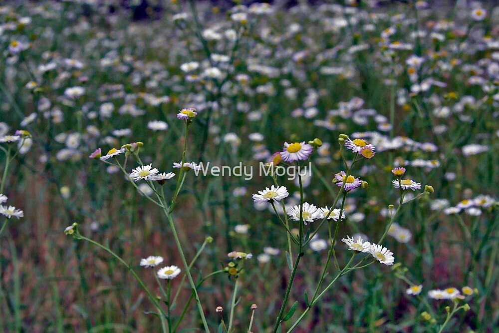Oh Daisy by Wendy Mogul