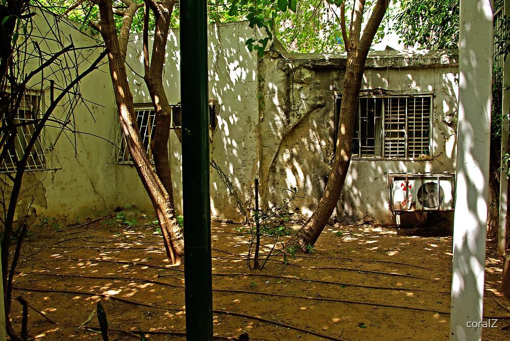 Backyard by coralZ