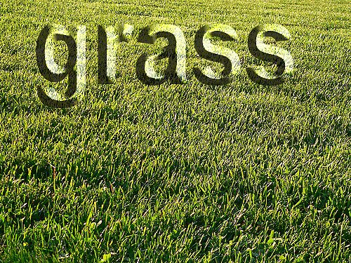 grass by aceproductions