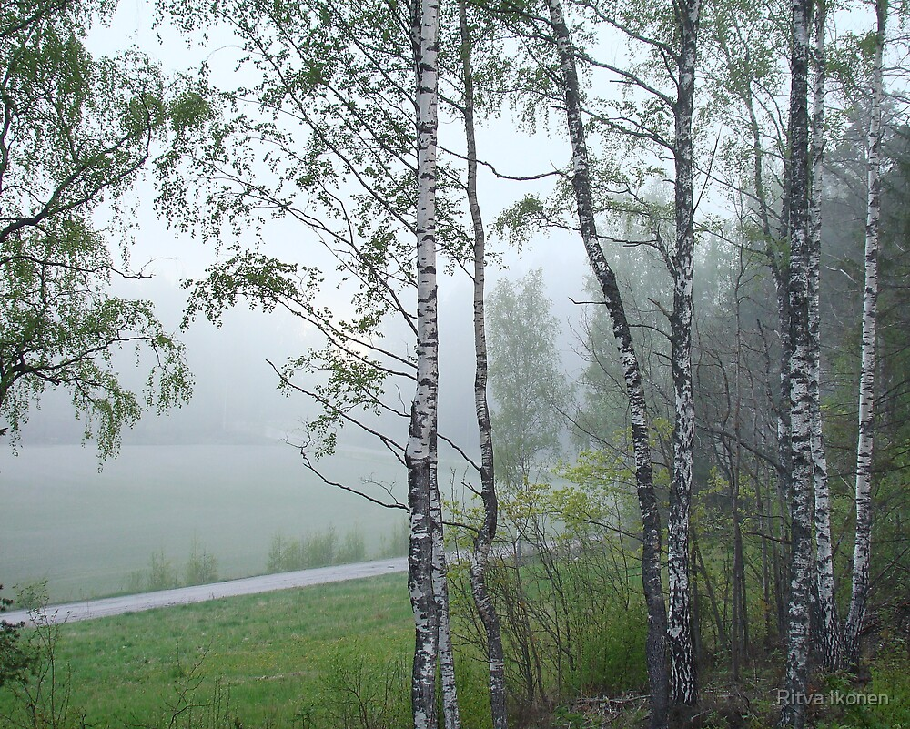 Misty May Evening by Ritva Ikonen