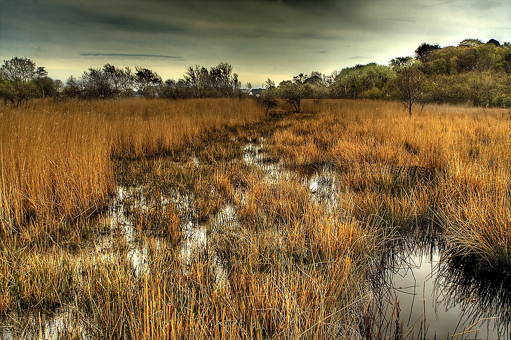 Brownsea Island Marsh by Nick Ball