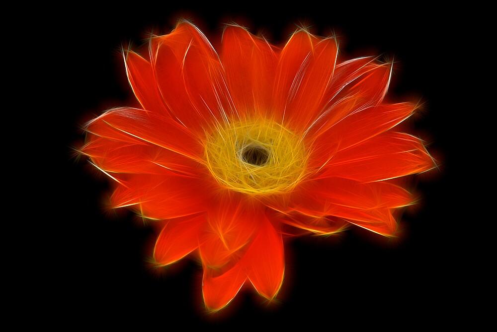 Red Flower Fractallius by Sarin