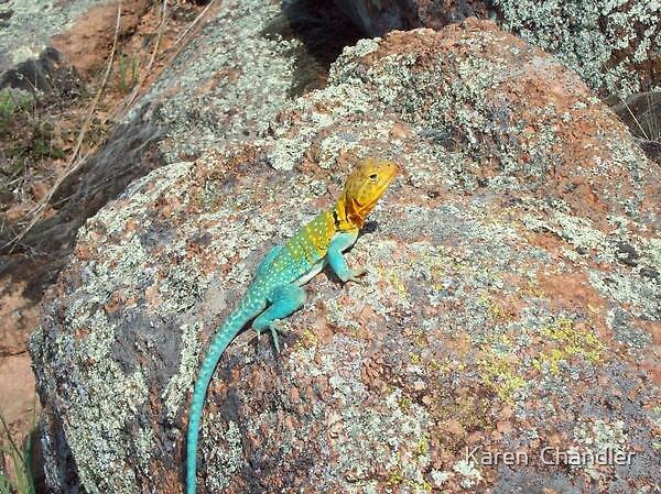 Rainbow Lizard by Karen  Chandler