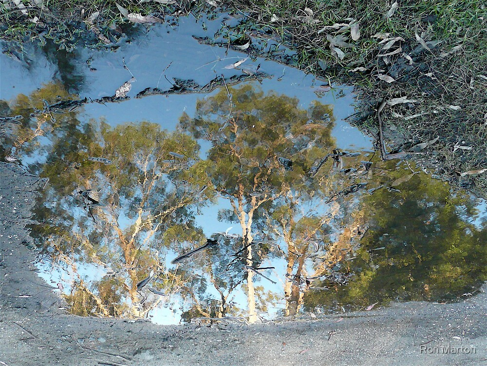 Albert's Puddle by Ron Marton
