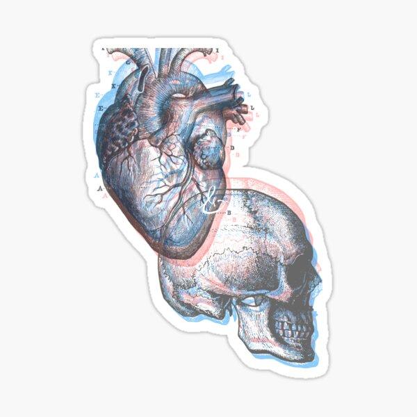 anatomy; heart and head Sticker