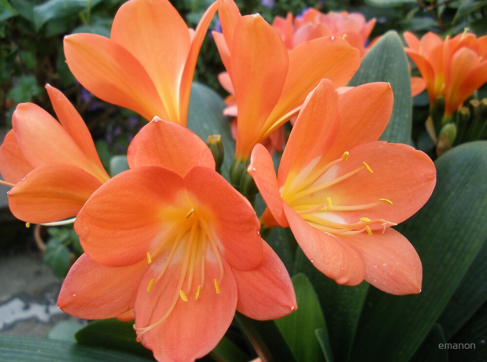 orange zest by emanon