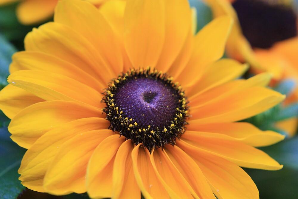 Flower study II.214 by Colleen Salls