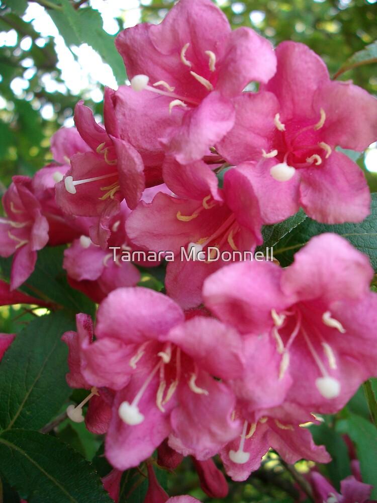 Cascading Pink #3 by Tamara Lindsey