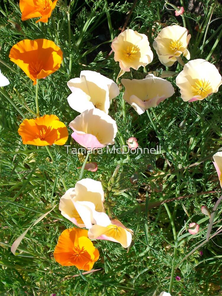 Mixed Poppies by Tamara Lindsey