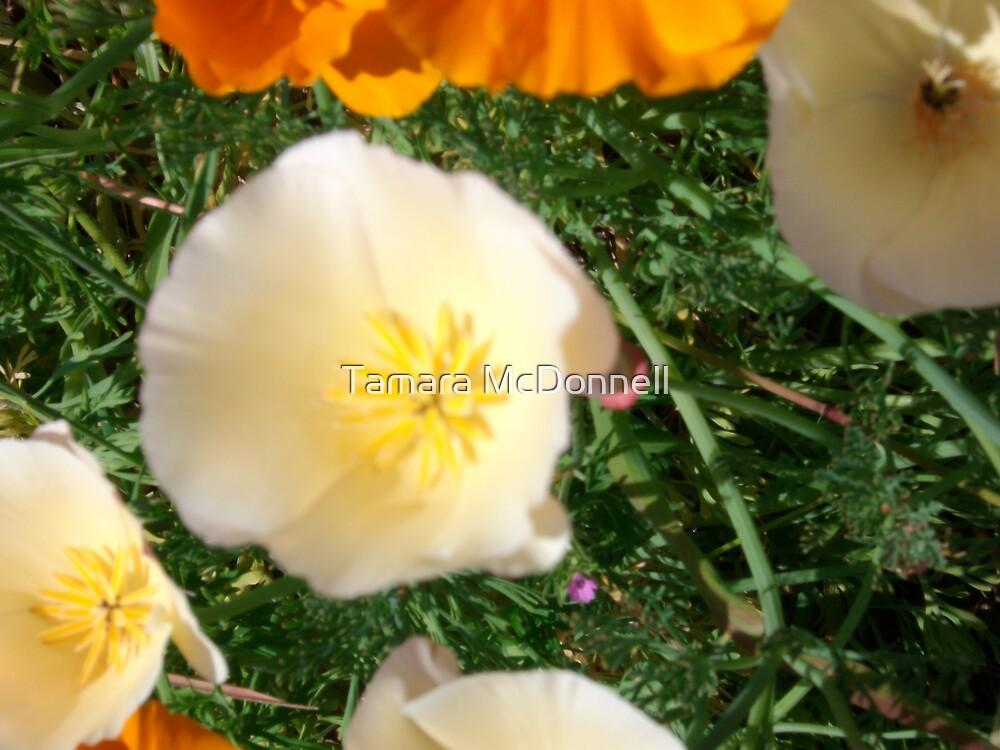 Mixed Poppies #3 by Tamara Lindsey