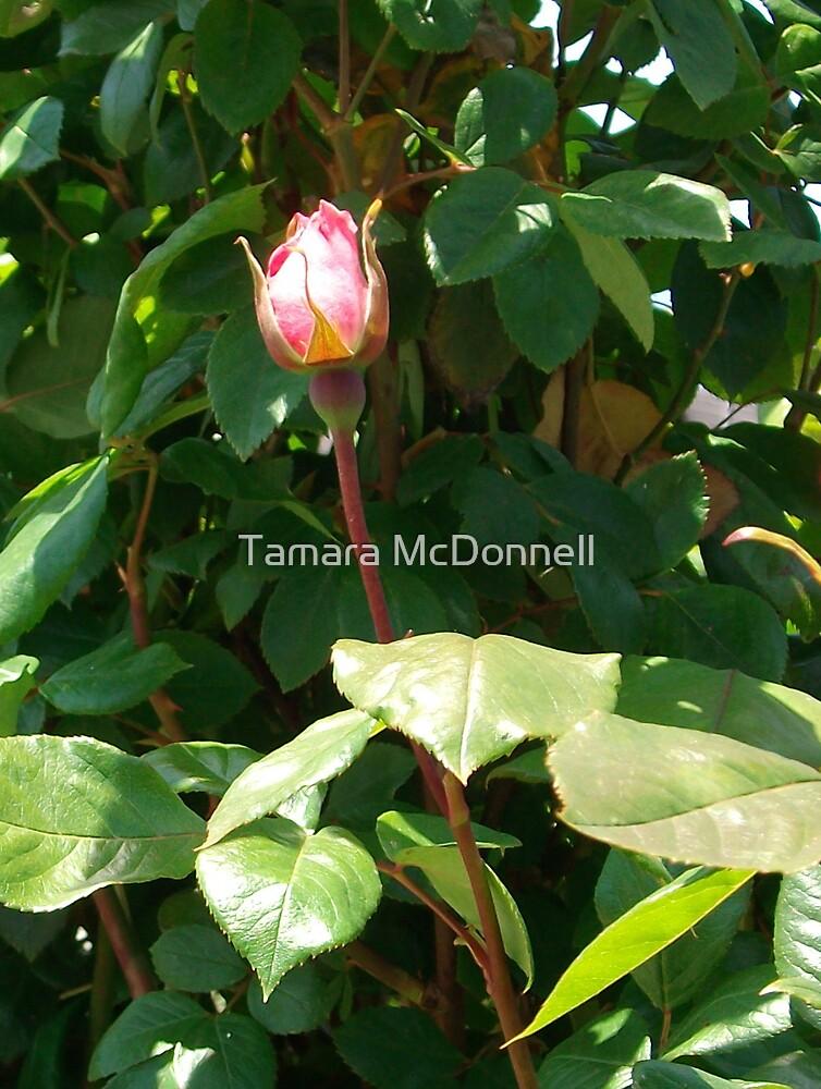 Single Rose #2 by Tamara Lindsey