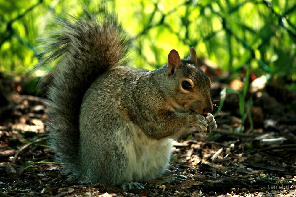 Close up Of A Squirrel by terrebo