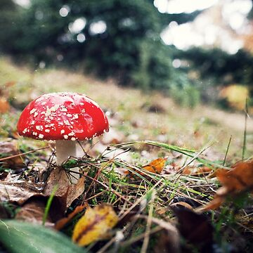 Red Mushroom with White Spots by melbournedesign