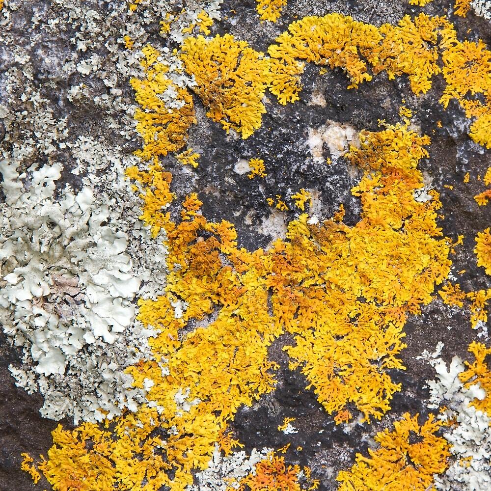 Liken Lichen 4 by teresa engelhard