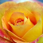 Red and Yellow Rose by rom01