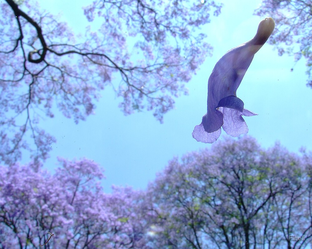 Falling Jacaranda blossom by Fineli
