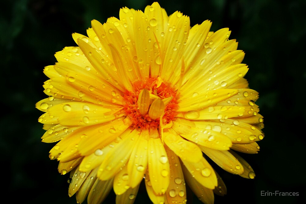 Yellow Rain by Erin-Frances