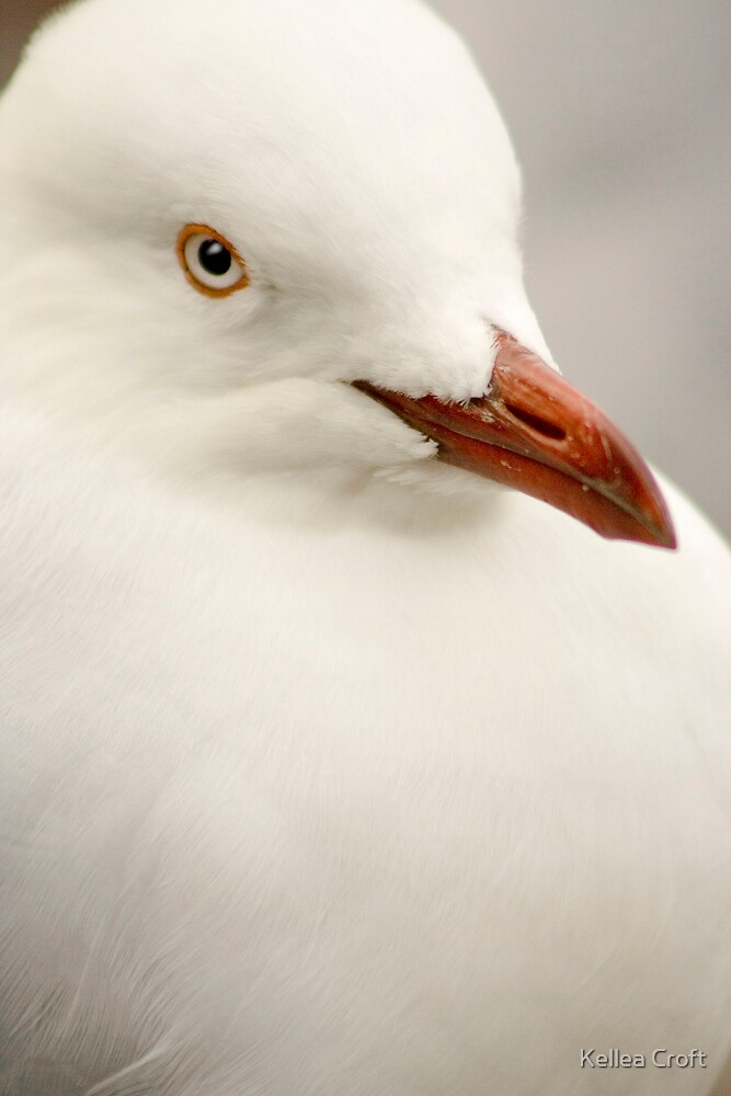 Seagull Stare by Kellea Croft