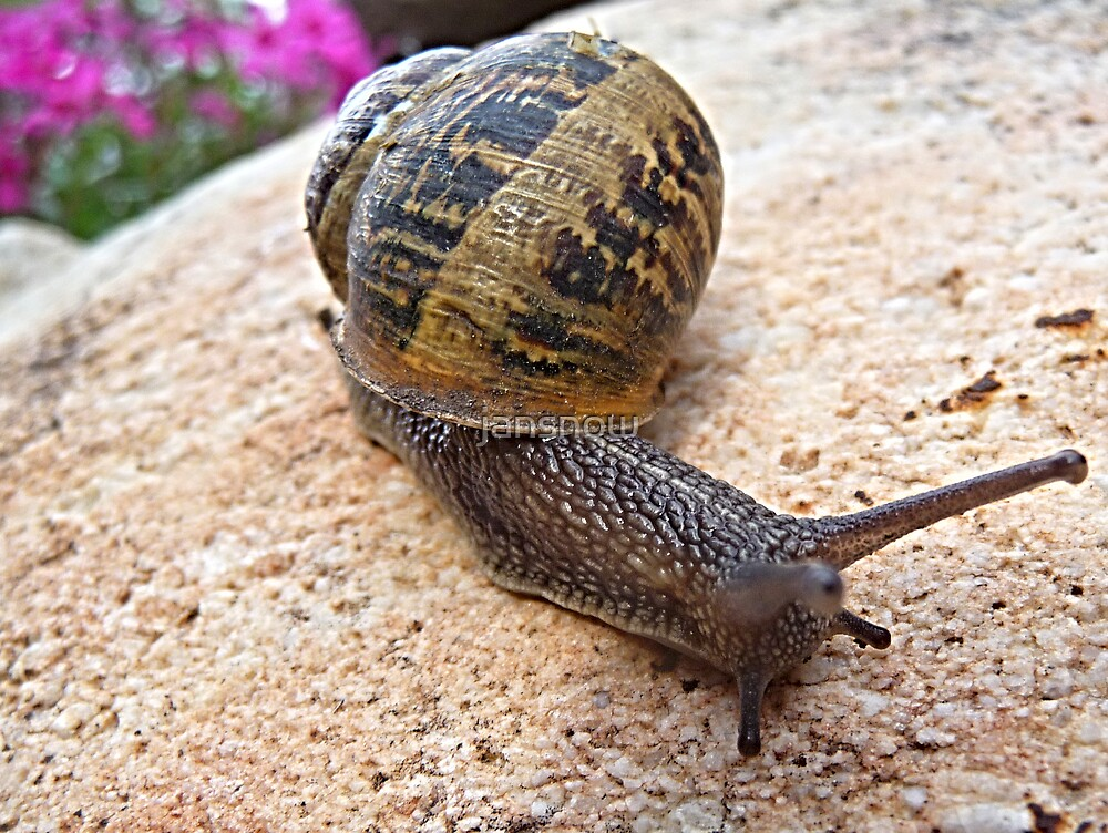At A Snail's Pace © by jansnow