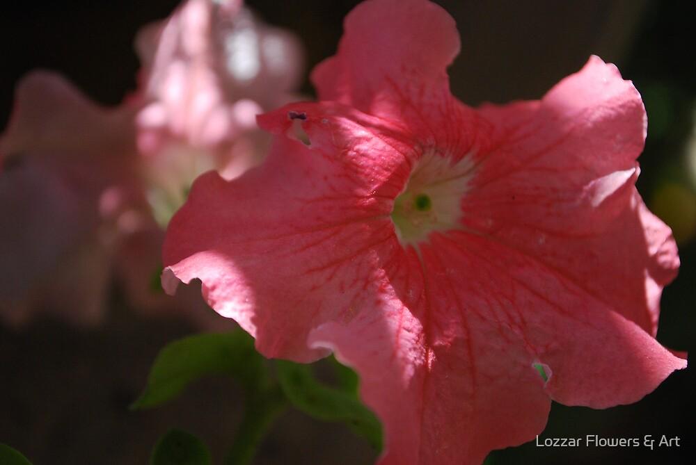 Sunlit petunas  by Lozzar Flowers & Art