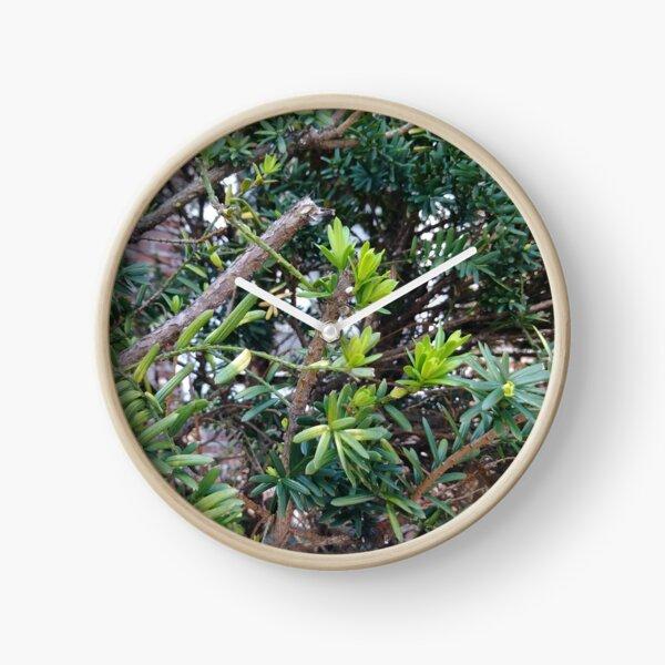 Лето, Shine, #shine, green, #green, bush, #bush, summer, #summer, lives, #lives Clock
