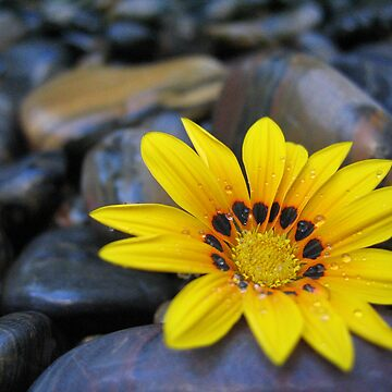 Yellow Flower Blackrock by quintonsmith