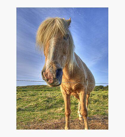 Longis Horsey - Alderney Photographic Print