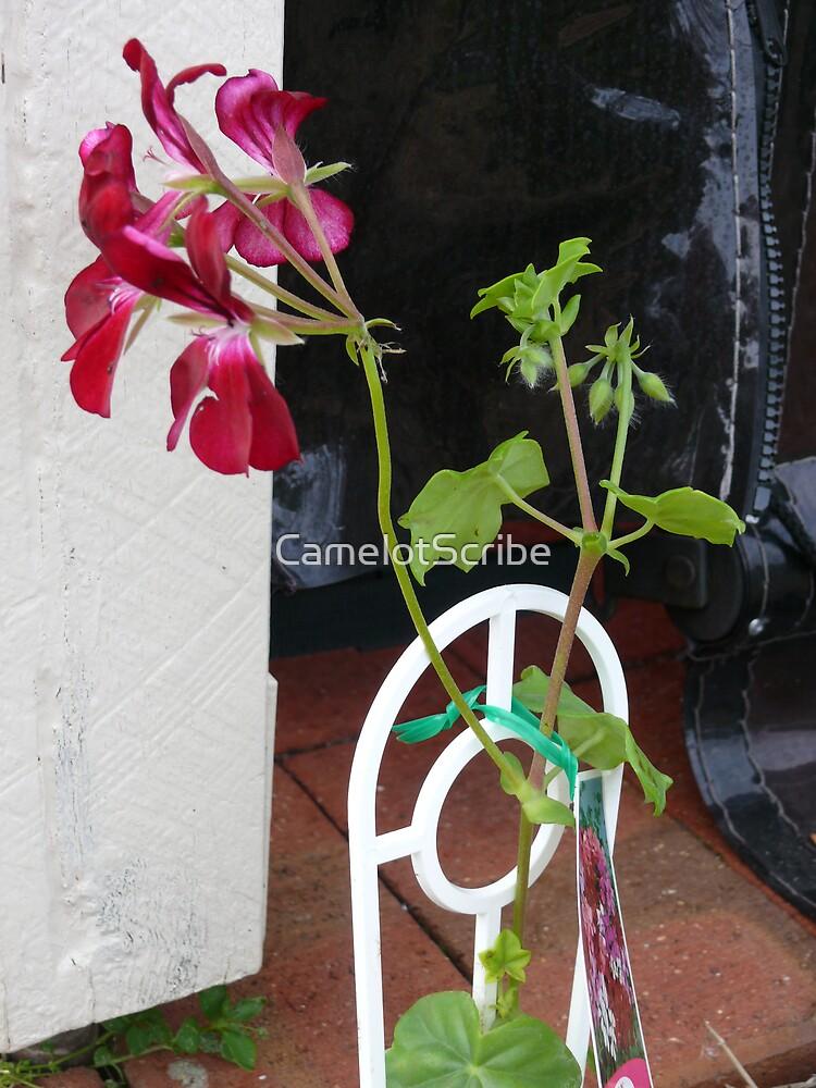 Geranium by CamelotScribe
