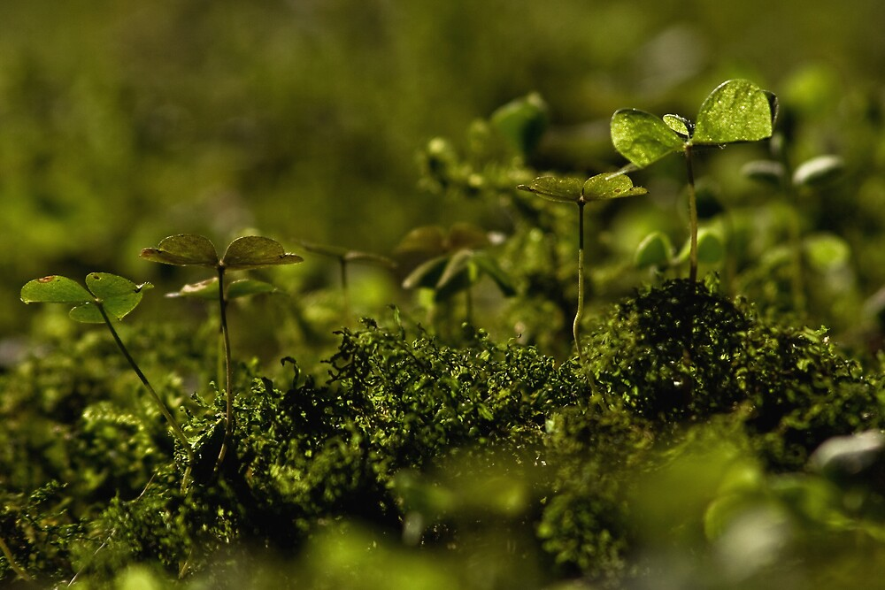 green life by kersta1