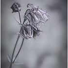 Columbine in Black and White by Eileen McVey