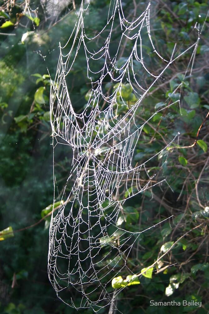 Dewed Cobweb by Samantha Bailey