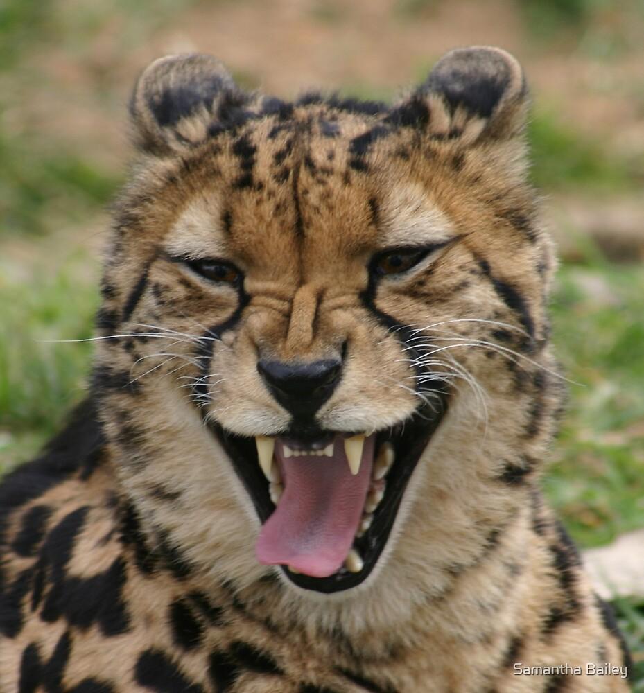King Cheetah Chuckle by Samantha Bailey