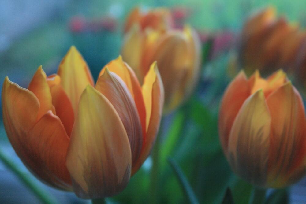 Orange Tulips by Tasha  Blackmore