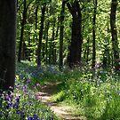 Woodland path by Jodi Webb