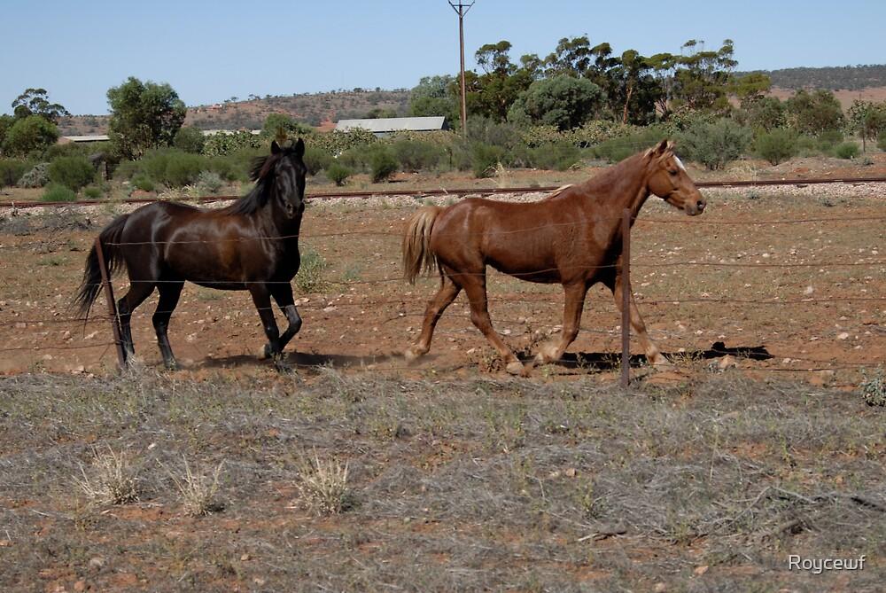 Horses by Roycewf