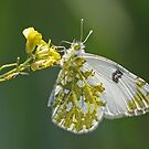 Another Bath White by Robert Abraham