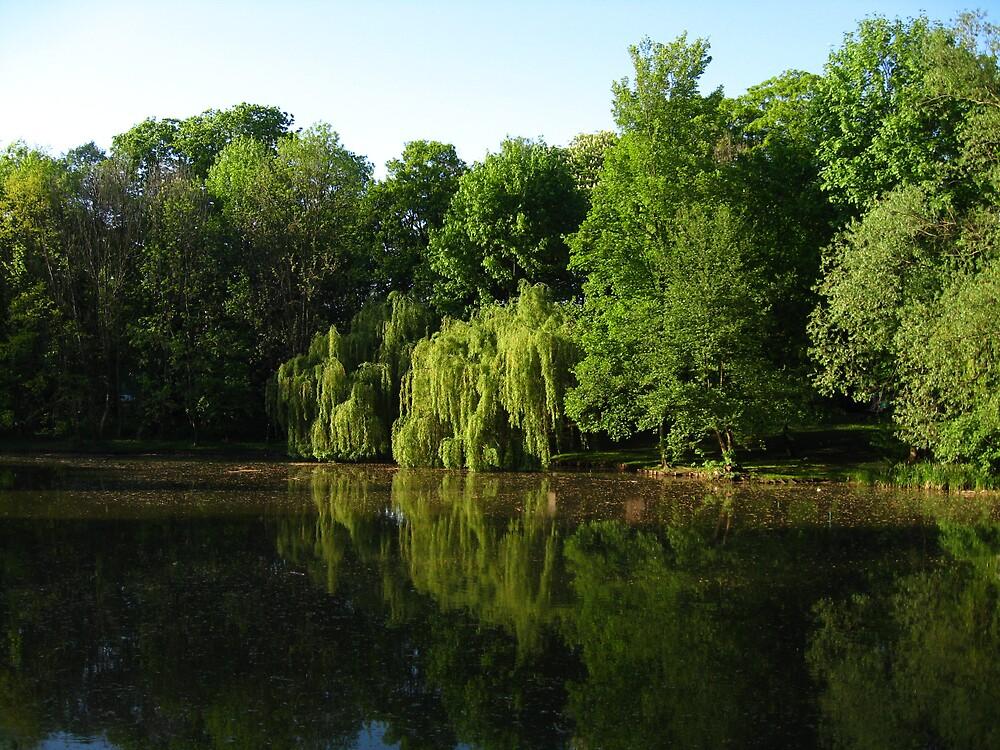 Pond by Ryszard Spychala