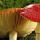 Fungi by Judi Corrigan