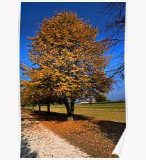 Colorific autumn Poster