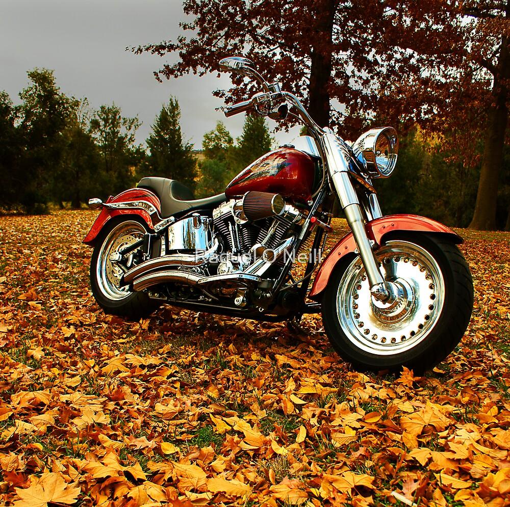 Harley by Raquel O'Neill