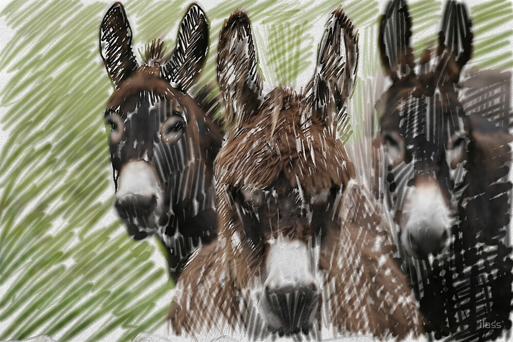 3 Donkeys by ilass