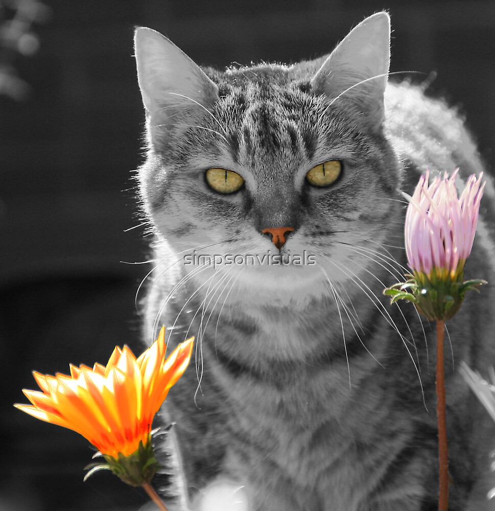 Cat among the Flowers Print by simpsonvisuals