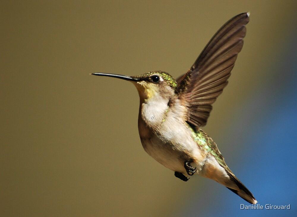 Hummingbird by Danielle Girouard
